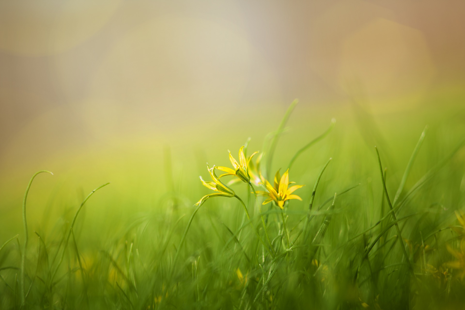 Green grass and a few fine yellow flowers in a summer glowing field